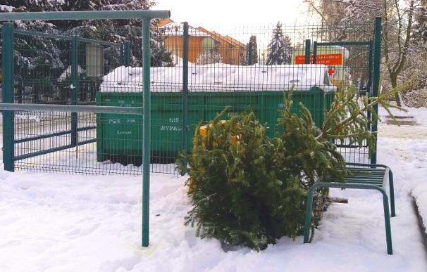 Rusza poświąteczna zbiórka choinek