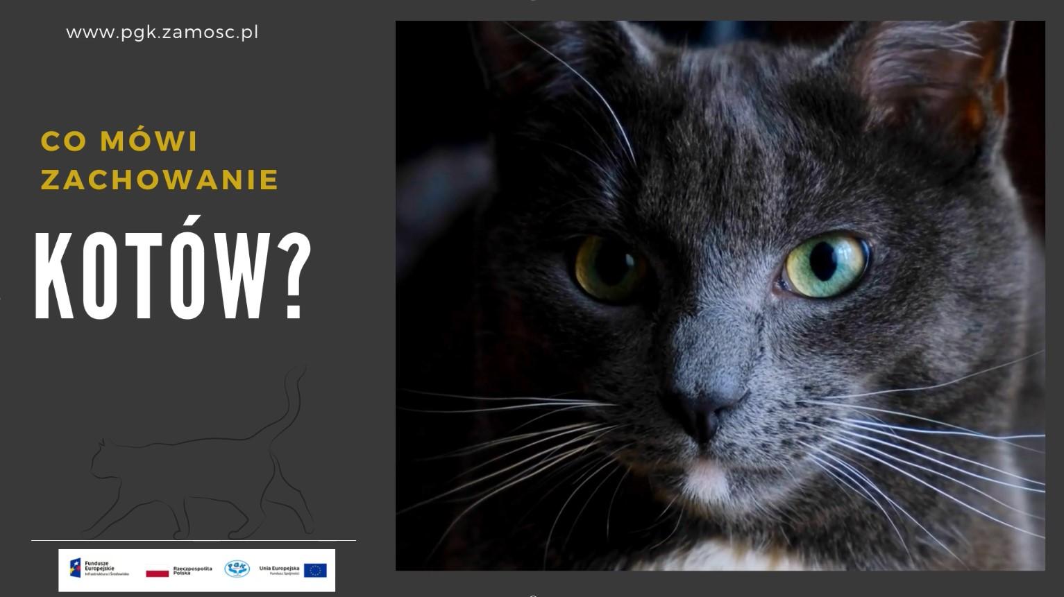 Co mówi zachowanie kota?